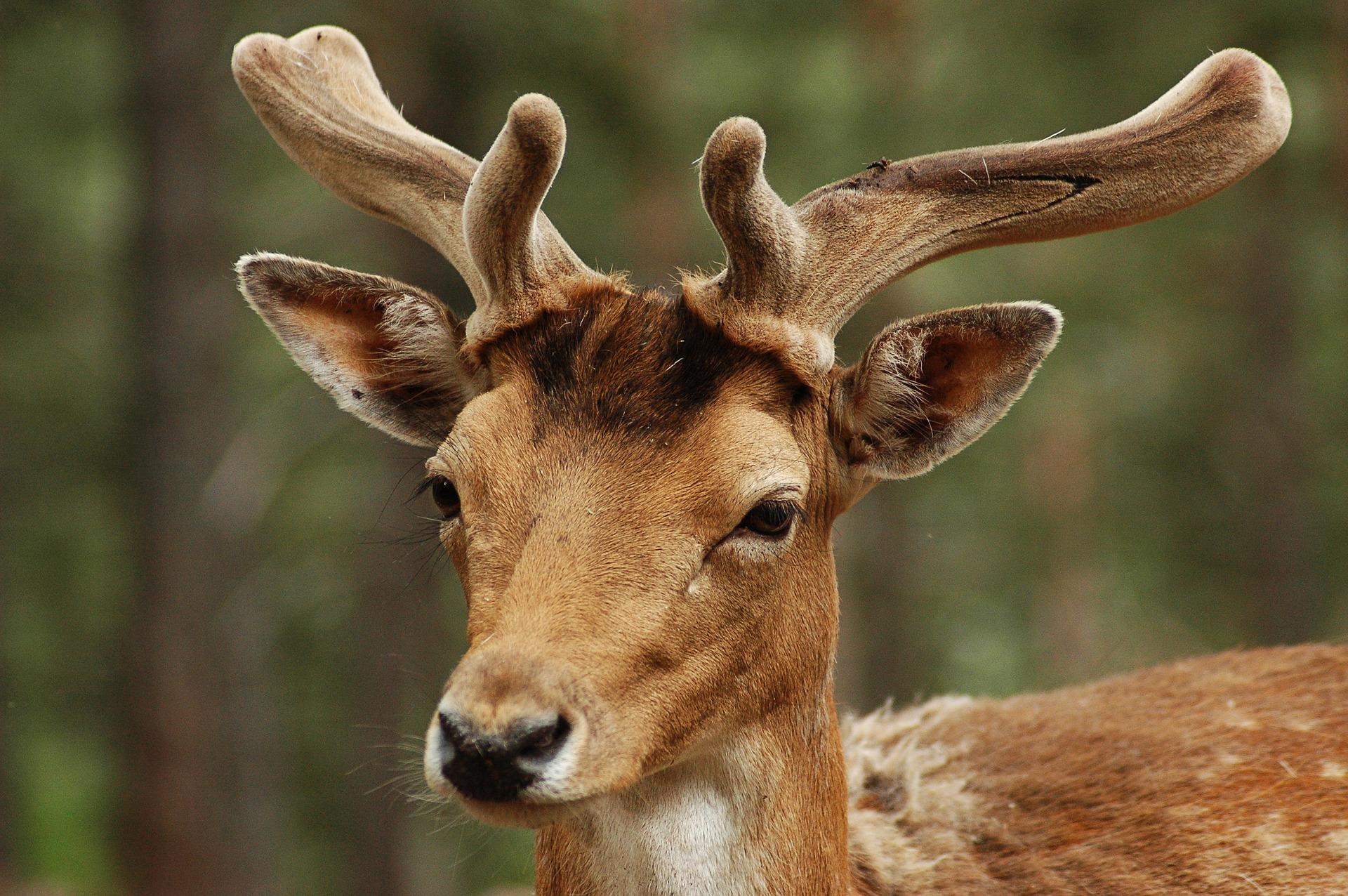 """Die Jagdhaftpflichtversicherung und die """"geschönte"""" Schadensmeldung"""