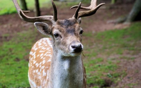 Ruhen der Jagd - und der im Eigentum einer GmbH stehende Eigenjagdbezirk
