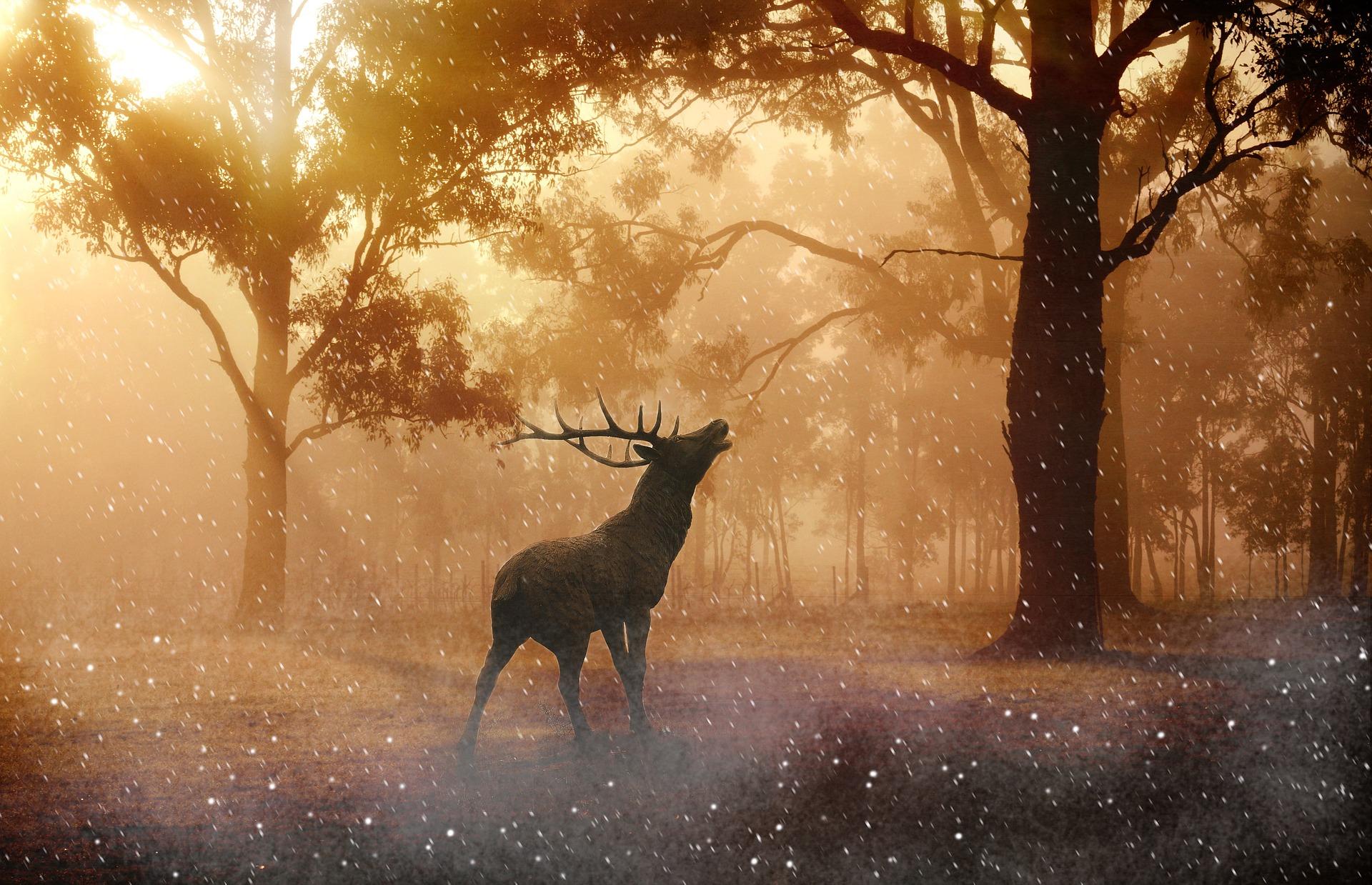 Die Ablehnung der Jagd aus ethischen Gründen