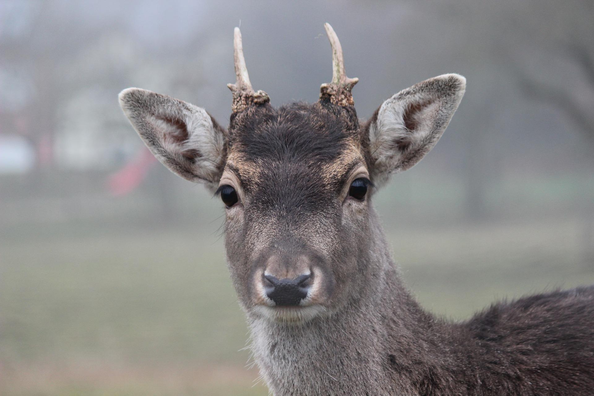 Kein Jagdschein für Tierquäler