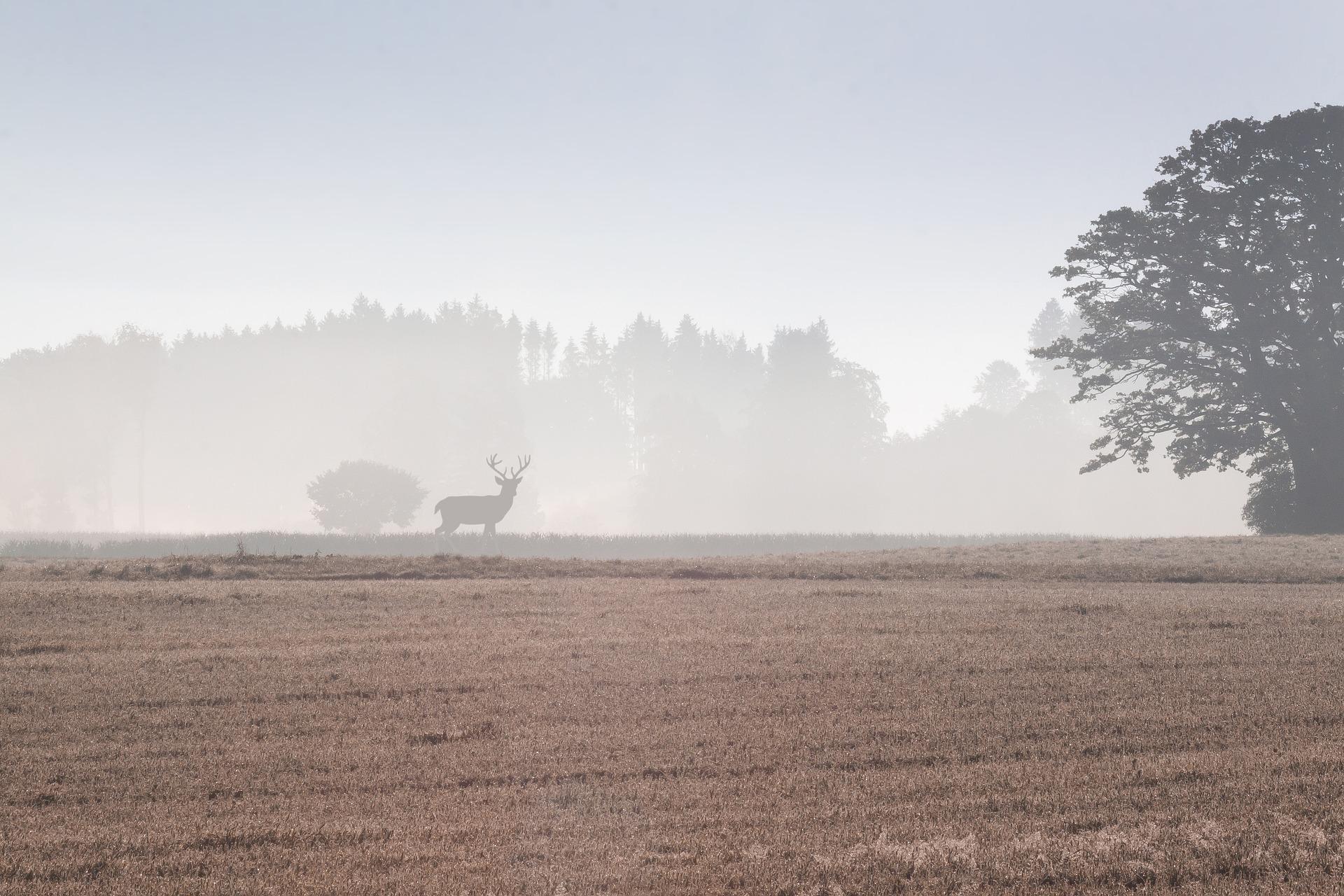 Die Mitgliedschaft in einer Jagdgenossenschaft