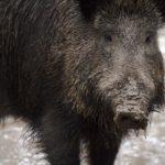 Kein Jagdsteuerprivileg für Kommunen