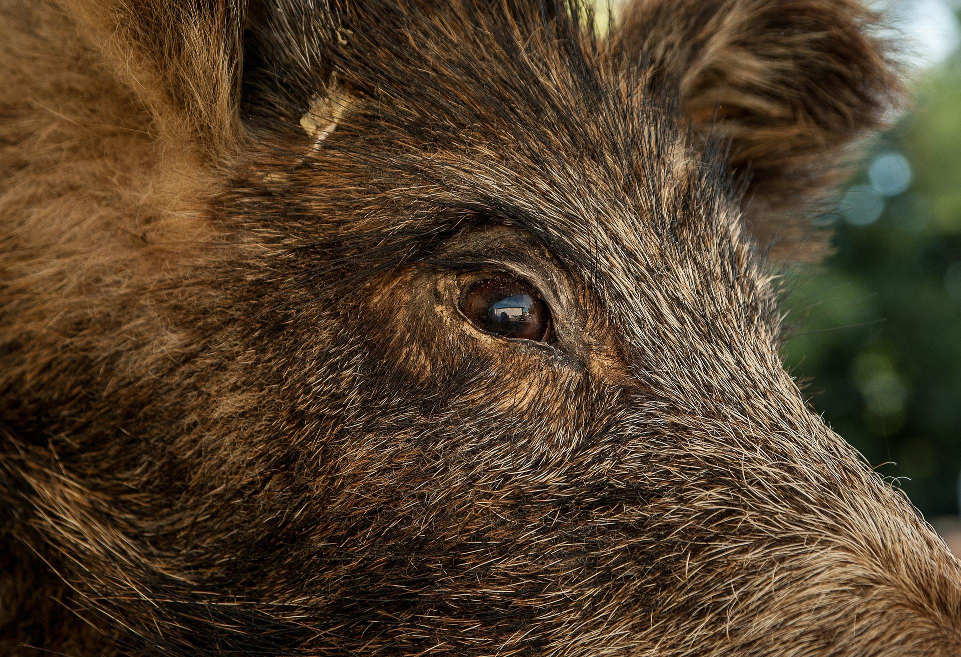 Keine rechten Jäger – Unzuverlässigkeit durch Mitgliedschaft in der NPD