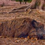 Runder Tisch für Jäger und Tierschützer im Saarland